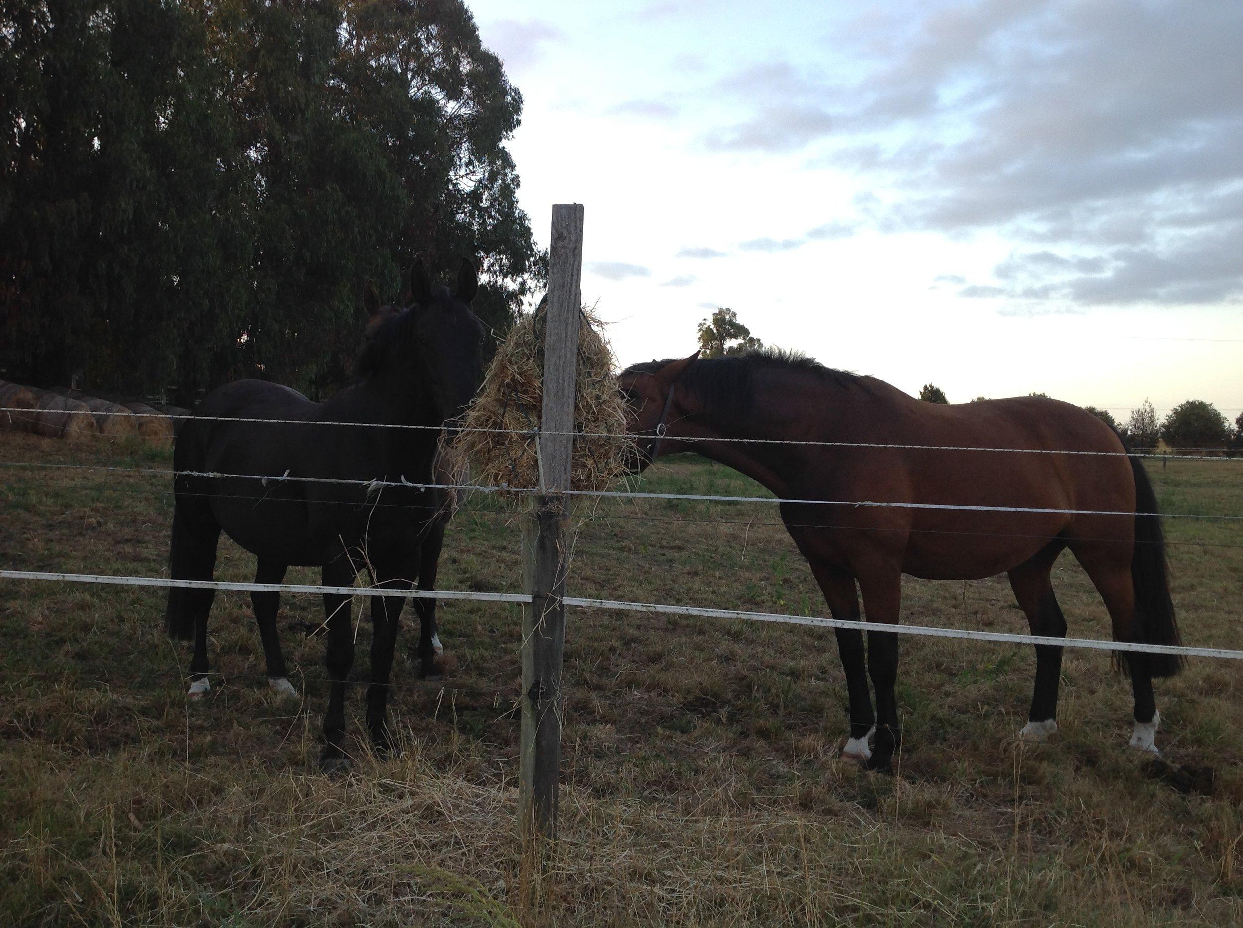 Healthy Happy horses here at Donovan Park!