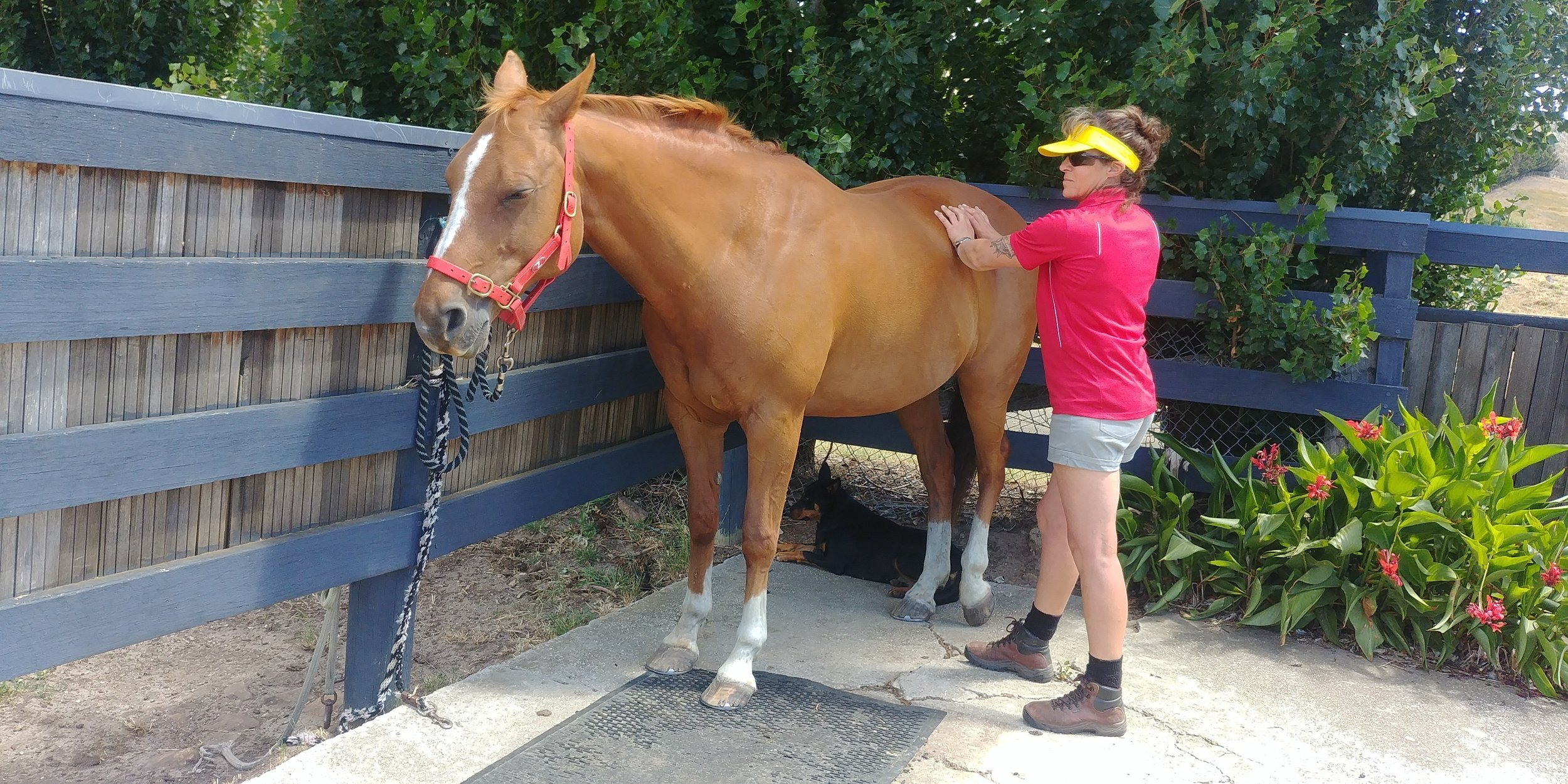 Muscle Rehab - Equine Muscle Rehab (Soft Tissue Release) - $70