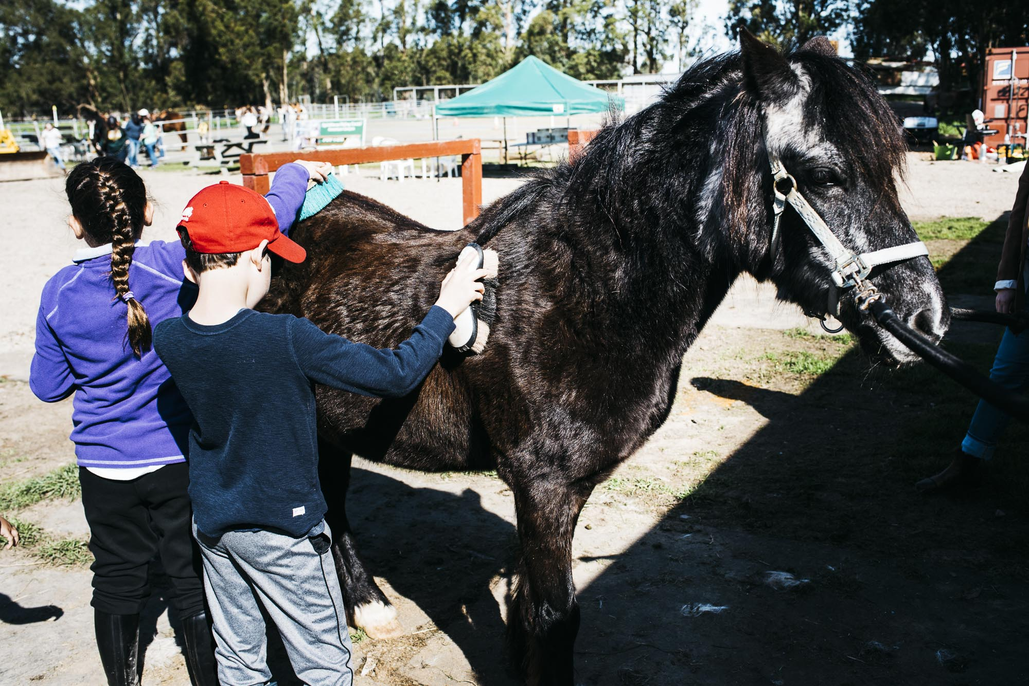 The kids learning grooming and horse safety.