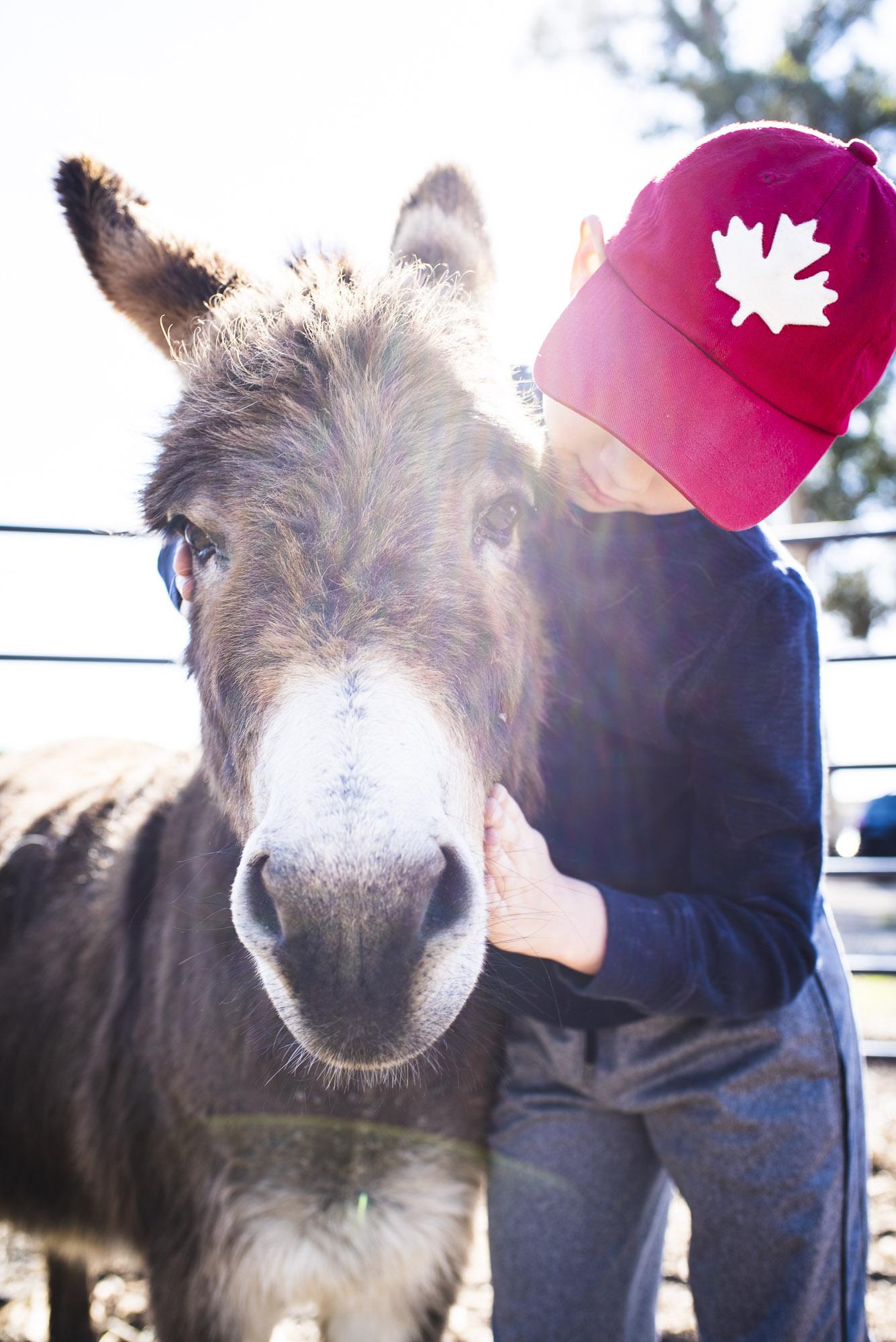 Ezra with Donkey.