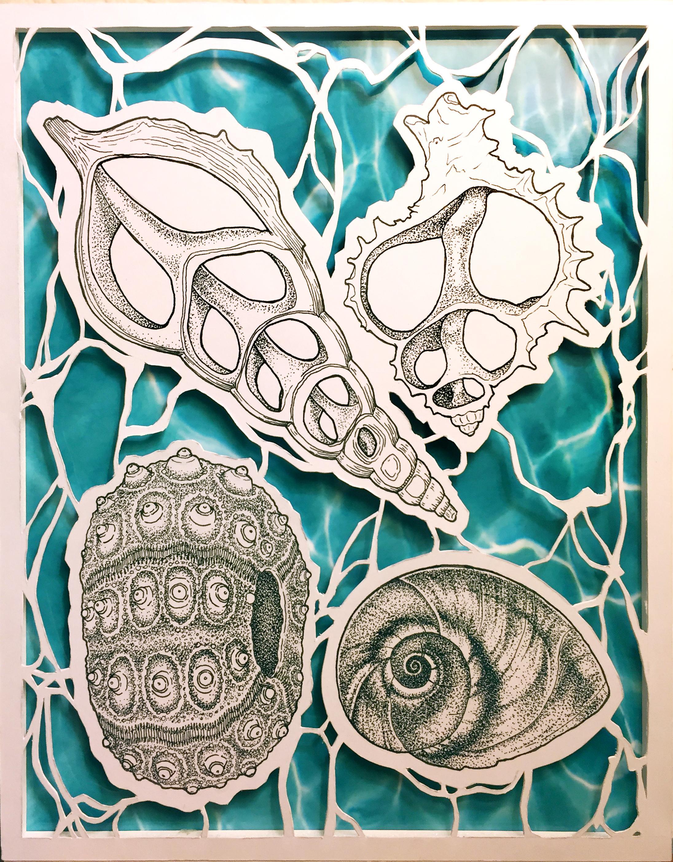 Shell Study