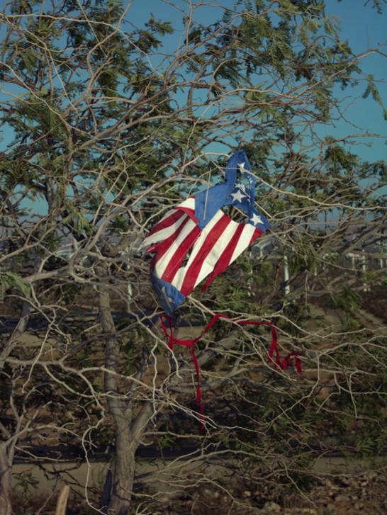 The Kite, Still Life, 2018