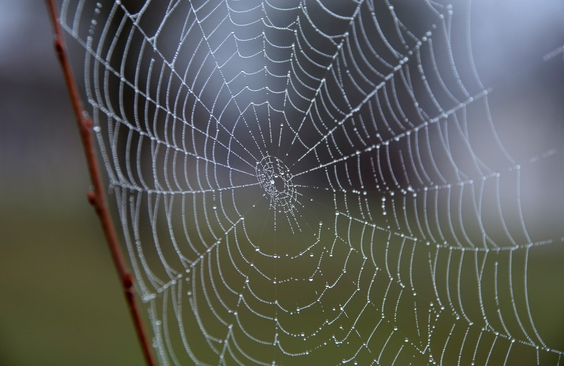 A Dew Covered Spiderweb