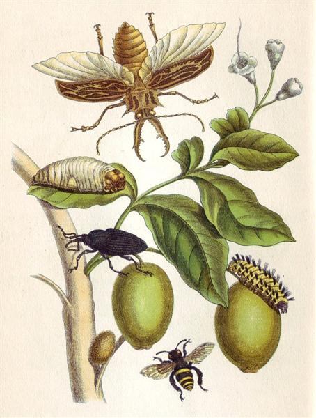 from-metamorphosis-insectorum-surinamensium-plate-xlviii-1705.jpg!Large.jpg