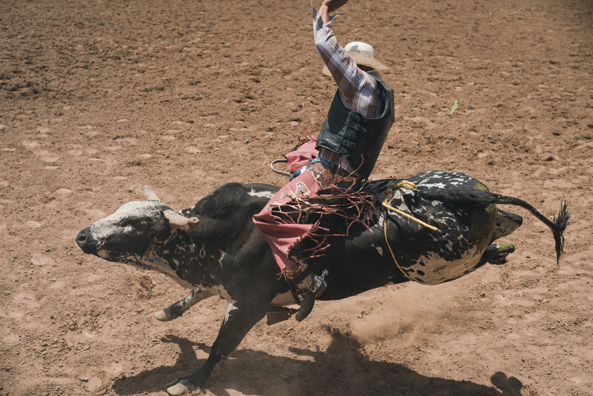 Rodeo_selects-2845.jpg