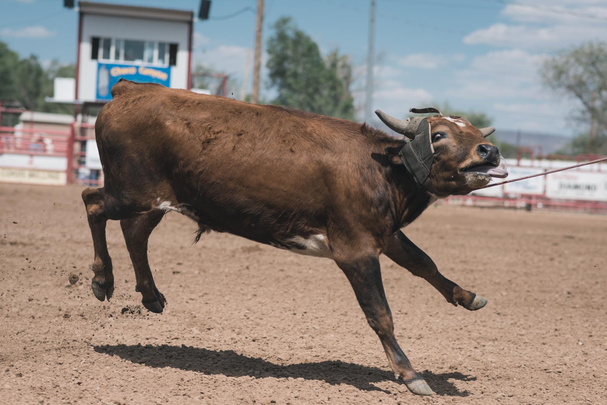 Rodeo Grants-3327.jpg