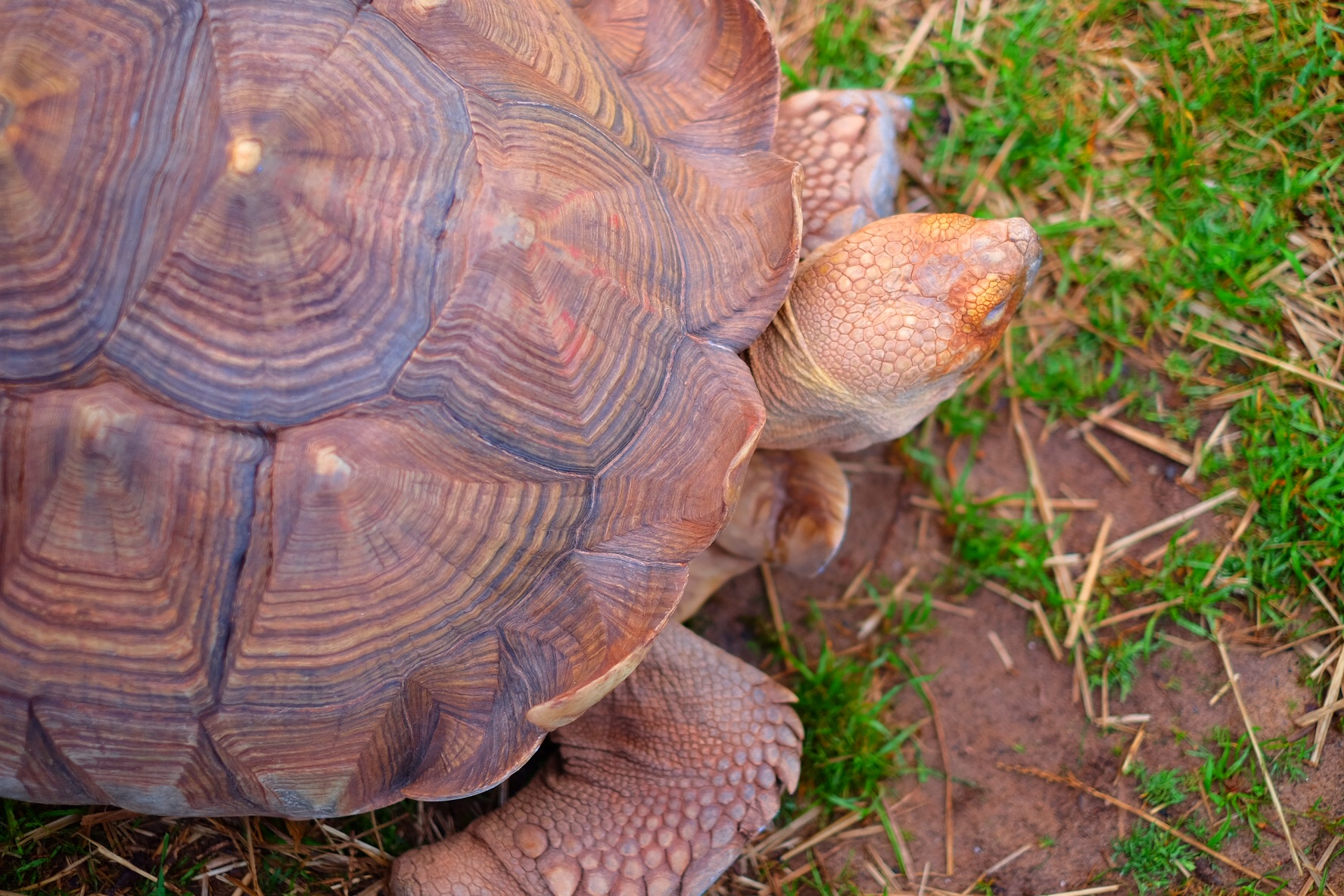 African Tortise 120 years old!
