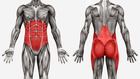 core-muscles-group.jpg