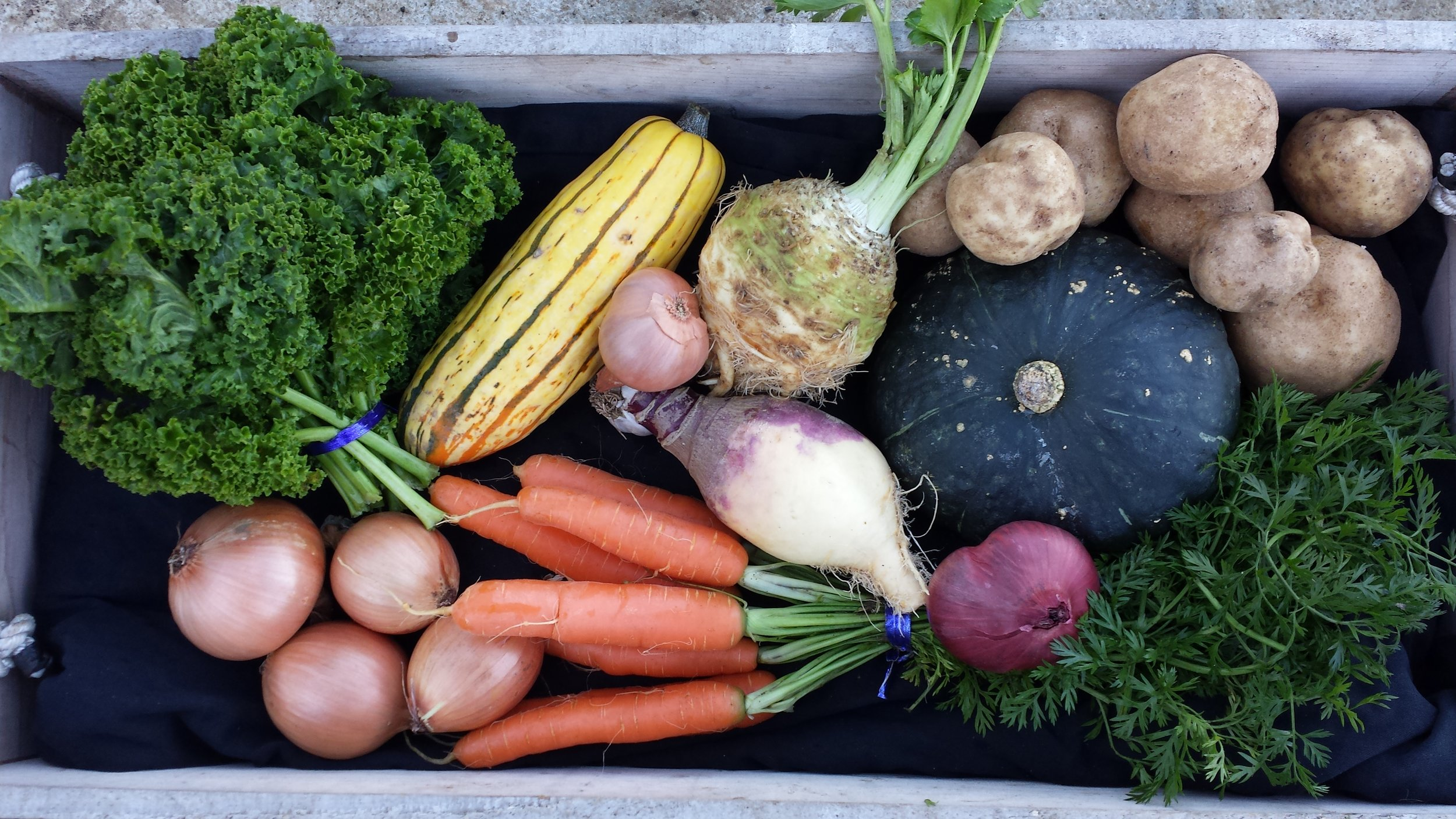 Root vegetables and leafy greens are among the Winter CSA options in Tompkins County. Image Source: Allen Neighborhood Center