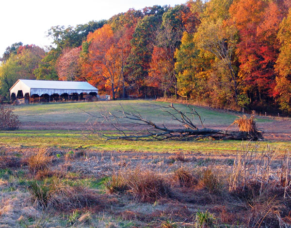 Loudoun County Wetlands Bank, Phase II - Loudoun County, VA
