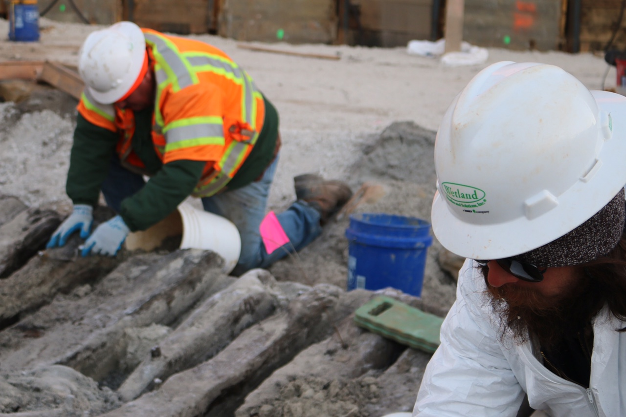 WSSI archeologists Daniel Osborne and Daniel Baicy hand excavate the timbers of the 18th-century ship's hull.