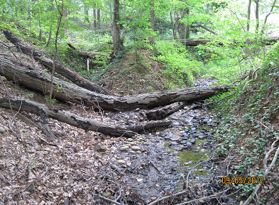 Before: Incised, badly degraded channel running through the proposed cemetery expansion project .