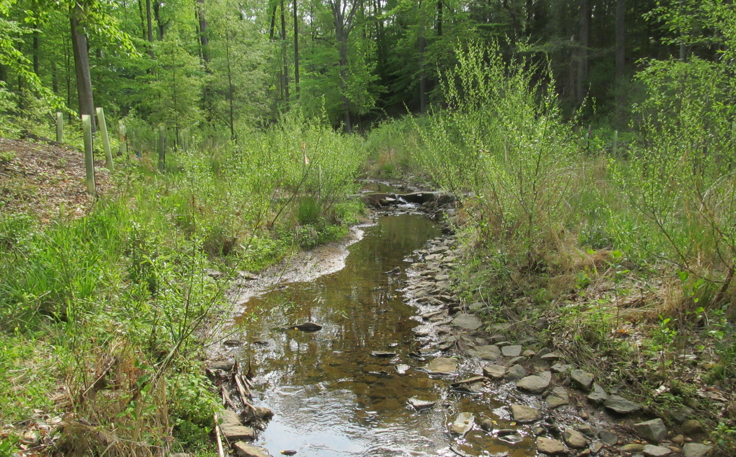 WSSI's federal work includes stream restoration at Fort Belvoir (pictured), where we've also provided  Waters of the U.S. delineation & survey location, searches for federally-threatened small whorled pogonia,and permitting assistance.