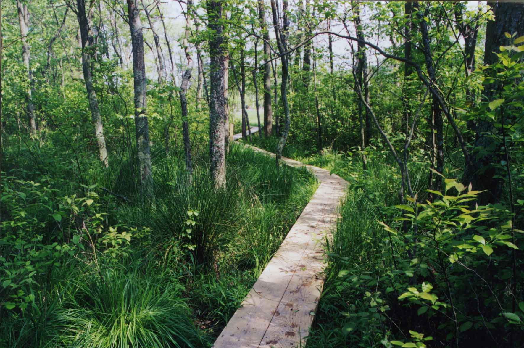 A trail in Julie J. Metz Wetlands Bank, Virginia's first approved wetlands bank - Prince William County, VA