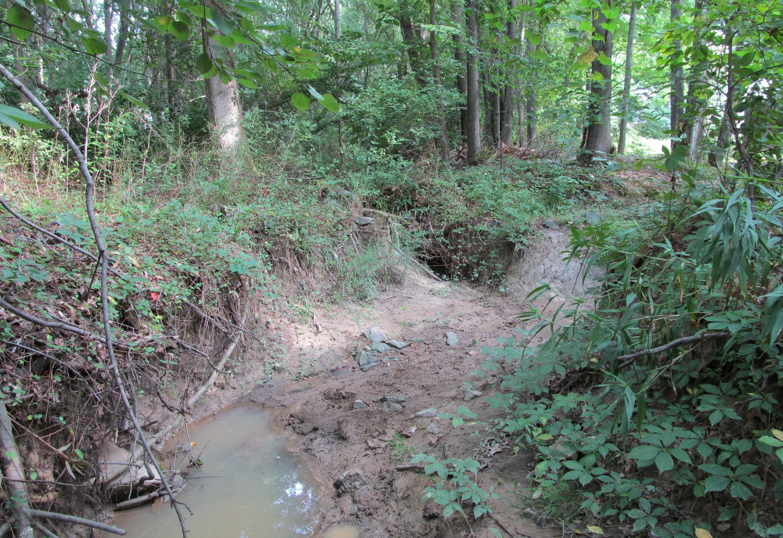 Before: This eroded stream channel in a neighborhood's narrow riparian corridor had exposed utility lines, a deteriorating bridge, and significant tree instability along the banks.