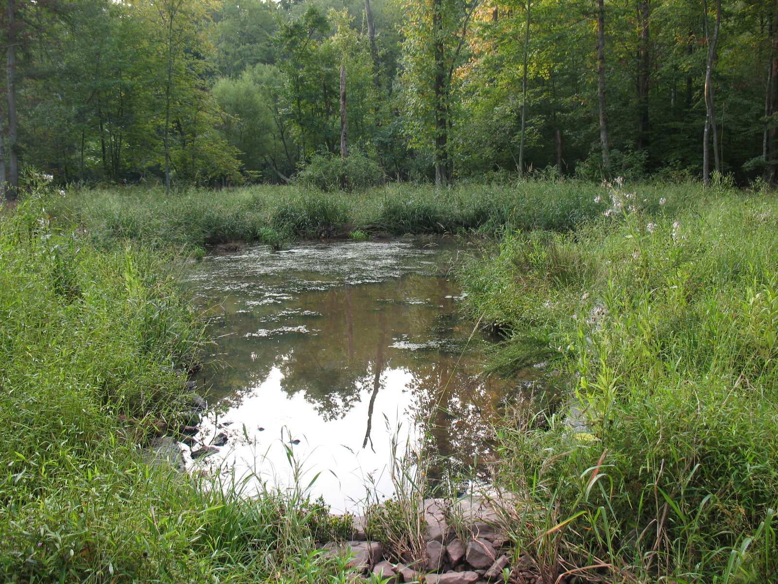 Looking downstream at the level s    preader - which transforms concentrated streamflow to sheet flow to protect an existing in-line wetland area from potential erosion - 1 year after the stream restoration construction.