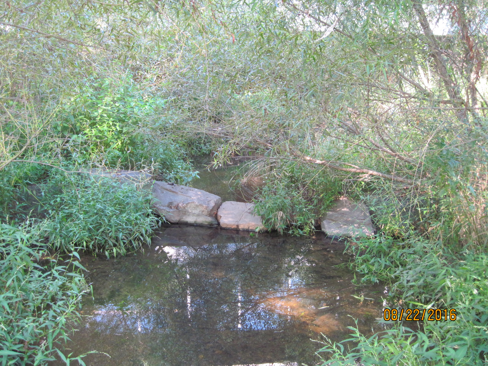 The riparian vegetation is thriving 7 years after construction, as shown in this photo of one of the stream's pools taken the day after a storm.