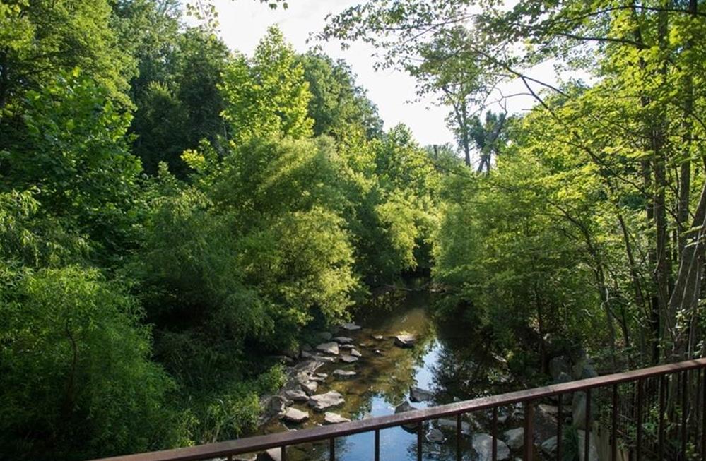 Snakeden Branch, 5 years after restoration