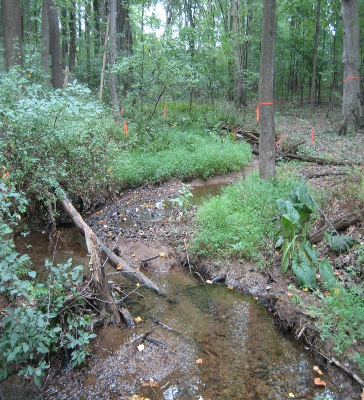 Unnamed tributary to Muddy Branch in Gaithersburg, Maryland