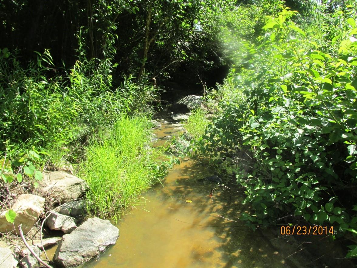 example of suitable mussel habitat