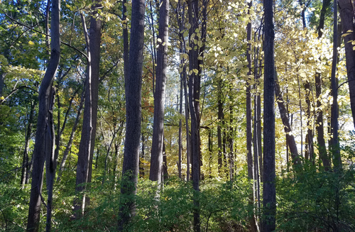 Forest conservation measures could be changing in Anne Arundel County, Maryland