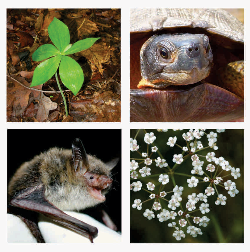 Endangered Species Act changes will be in effect September 26, 2019