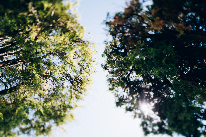 italian-trees.jpg