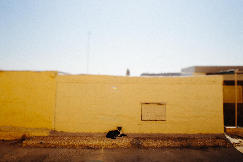 malta-cat.jpg
