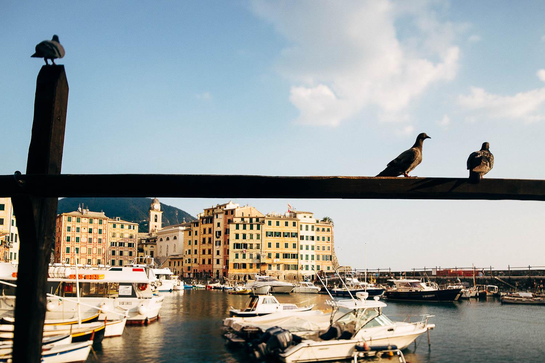 camogli-birds.jpg