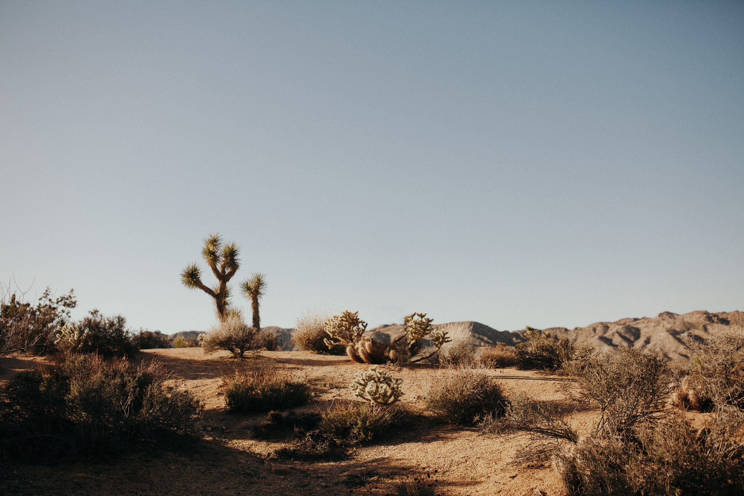 Tides_And_Pines_Joshua_Tree_090_empty.jpg