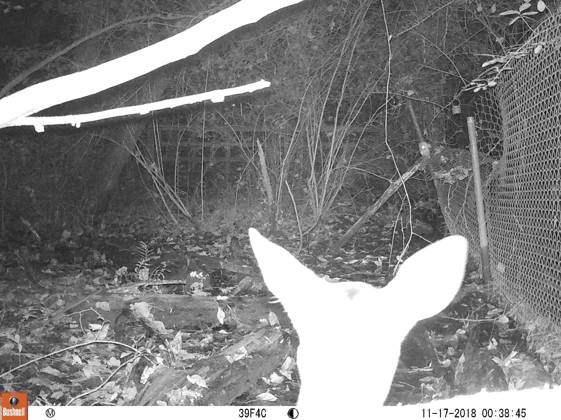 Deer and Owl.JPG