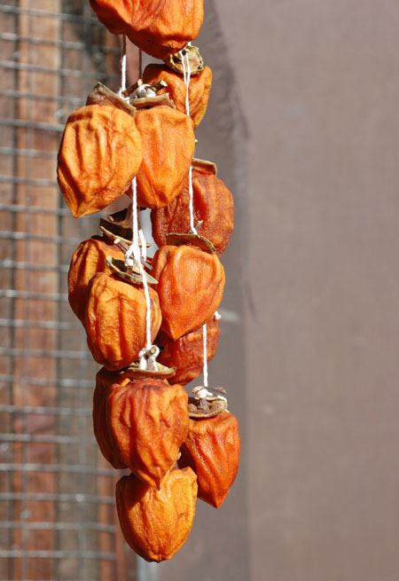 Drying hachiya persimmons.  These are so good!  Persimmons are dried and eaten all over temperate asia, but are just being discovered by other-than-Asian Americans.  I'm planning to plant more, but still deciding what varieties.  The plants are productive, disease resistant, almost pest free and require little pruning.  My neighbors let me pick about 150 fruits off of their 30 year old tree after they had already picked 550 large fruits!  I never knew what to do with that many persimmons until I found out about drying them whole a few years ago.  Early experiments went okay, but when tonia brought some back from chinatown, I realized the true potential and I'm all over it now.  They're like a giant natural gummy bear that's been deboned, had it's limbs and head removed and was given a hat and squished flat.. sort of.  Persimmons are a great example of the latent resource potential concept I'm so into since moving here.  After establishment, the long lived trees will produce persimmons whether they get used or not.  They could be eaten, sold fresh, dried and sold, traded, gifted (part of any truly stable economy), fed to animals or just left to look pretty on the tree.  Awesome.  I'll be learning more about persimmons and figuring out how to graft them.  There is a great persimmon collection at Winters here in California with varieties from all over the world.