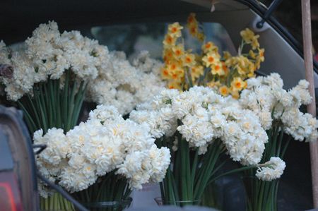 Flowers for market.  !Kaching!