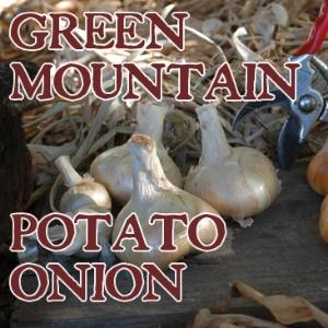 Green Mountain Multiplier Onion