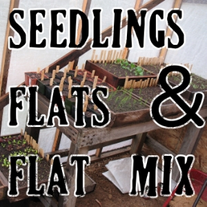 Starting vegetable seeds, seedling flats, and seed starting mix