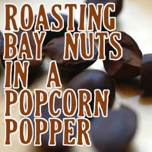 Roasting Bay Nuts In a Popcorn Popper