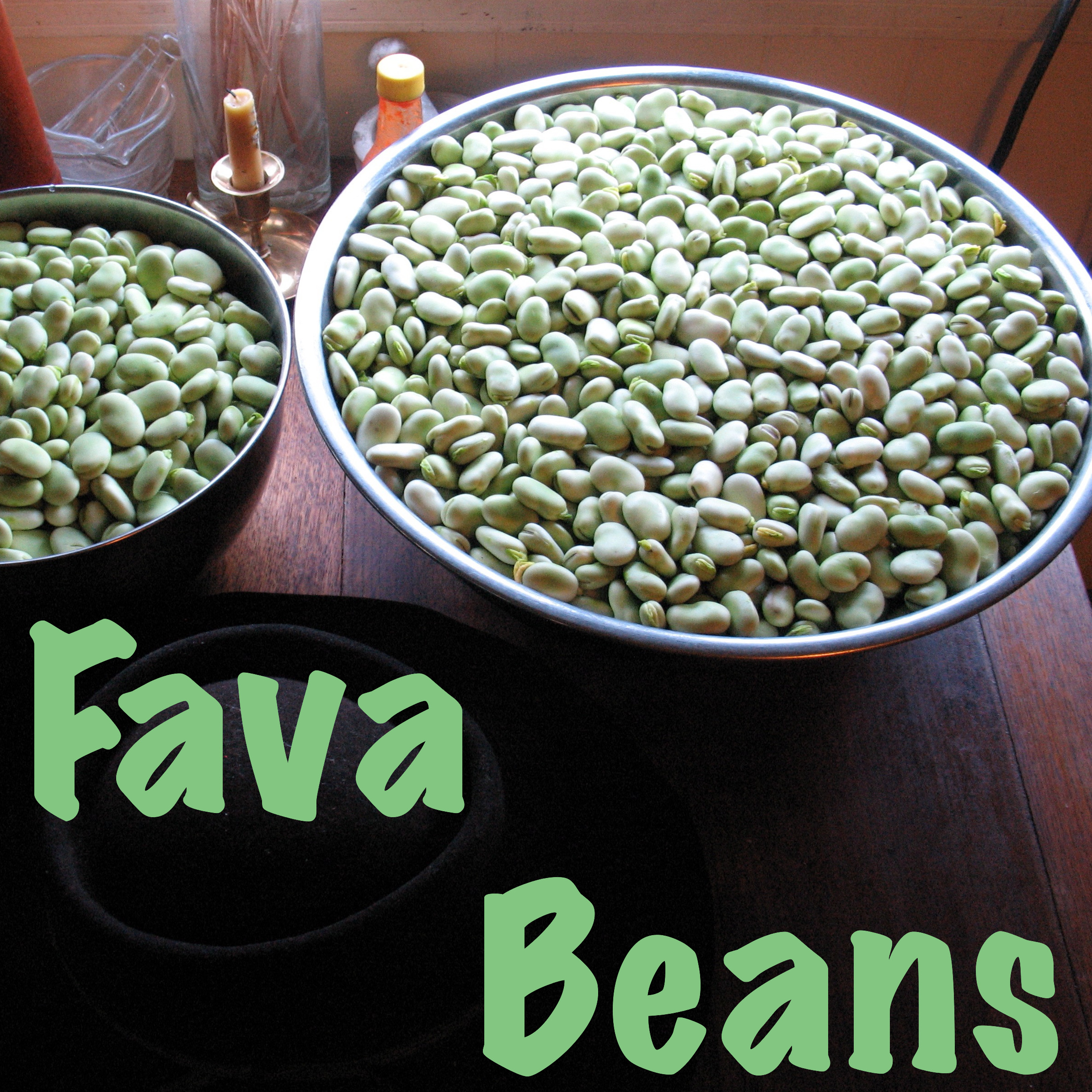 Fava Beans, Growing, Eating