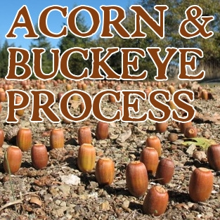 Amazing old videos on Native Californian Acorn and Buckeye processing!
