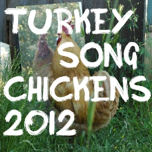 Turkeysong the year in the chickens 2012