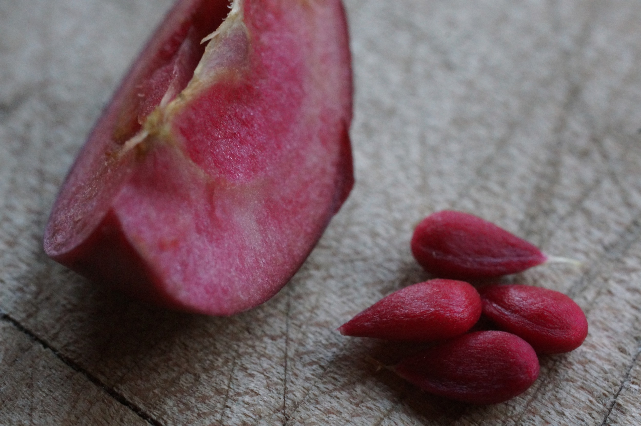 Maypole, red apple and red immature seeds