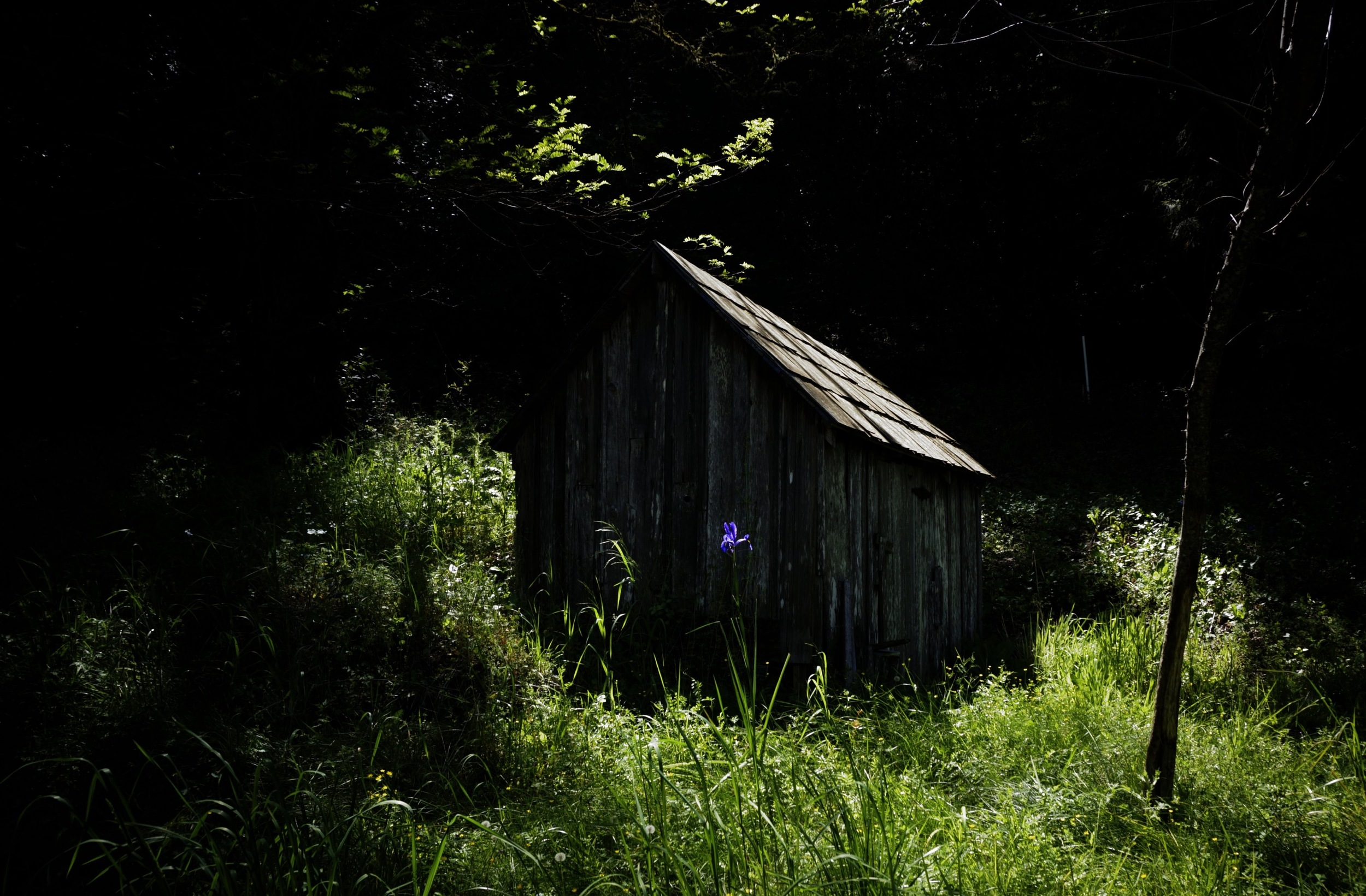 Old spring house on the neighbors place. A spring house is like a root celar. The spring runs through it to keep it cool.