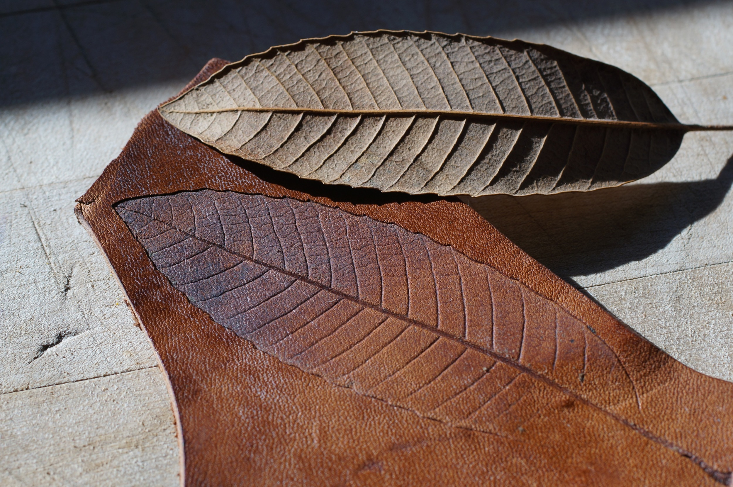 An idea I've been toying with, making leaf impressions in leather.