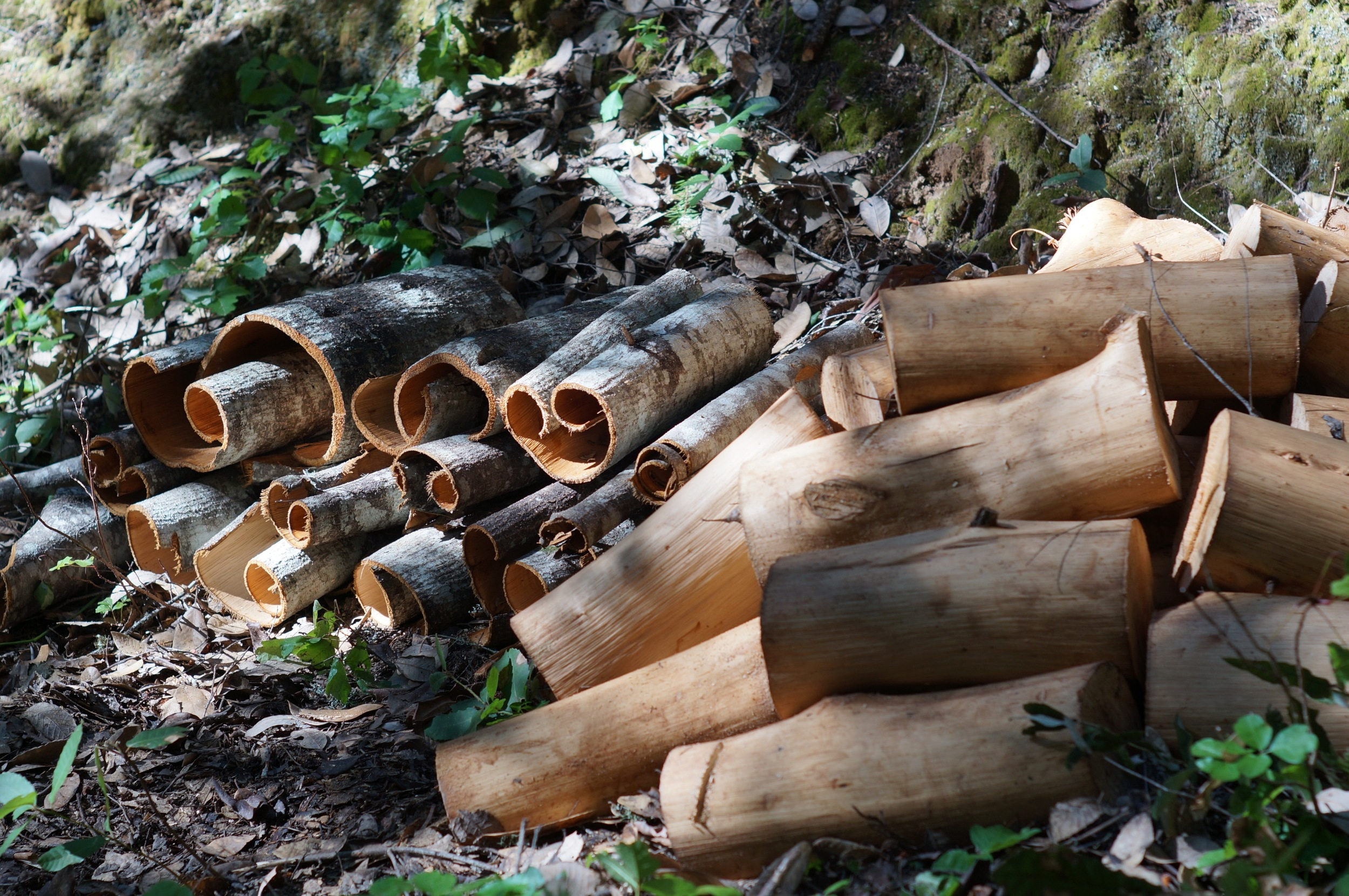 A batch of bark for tanning and wood for burning. Tan Oak.