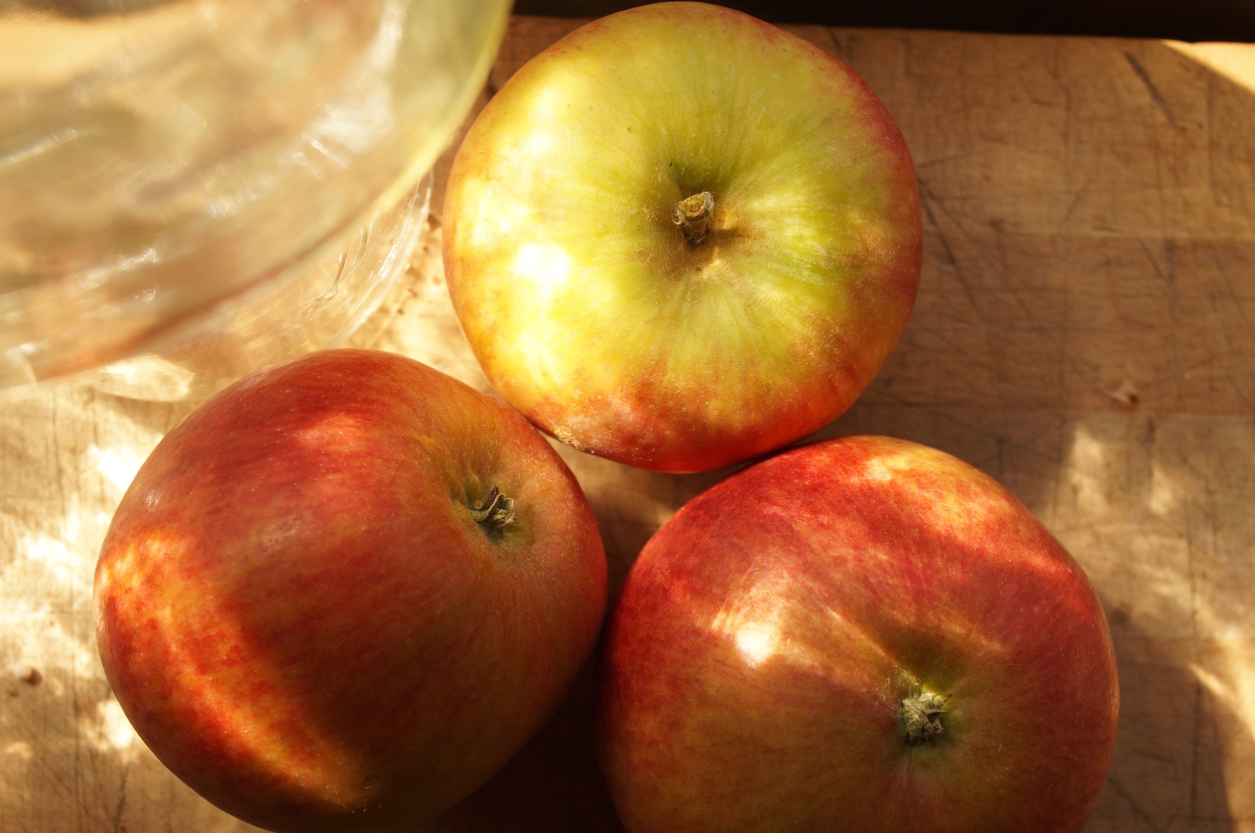 Mother, an old American apple of high repute.