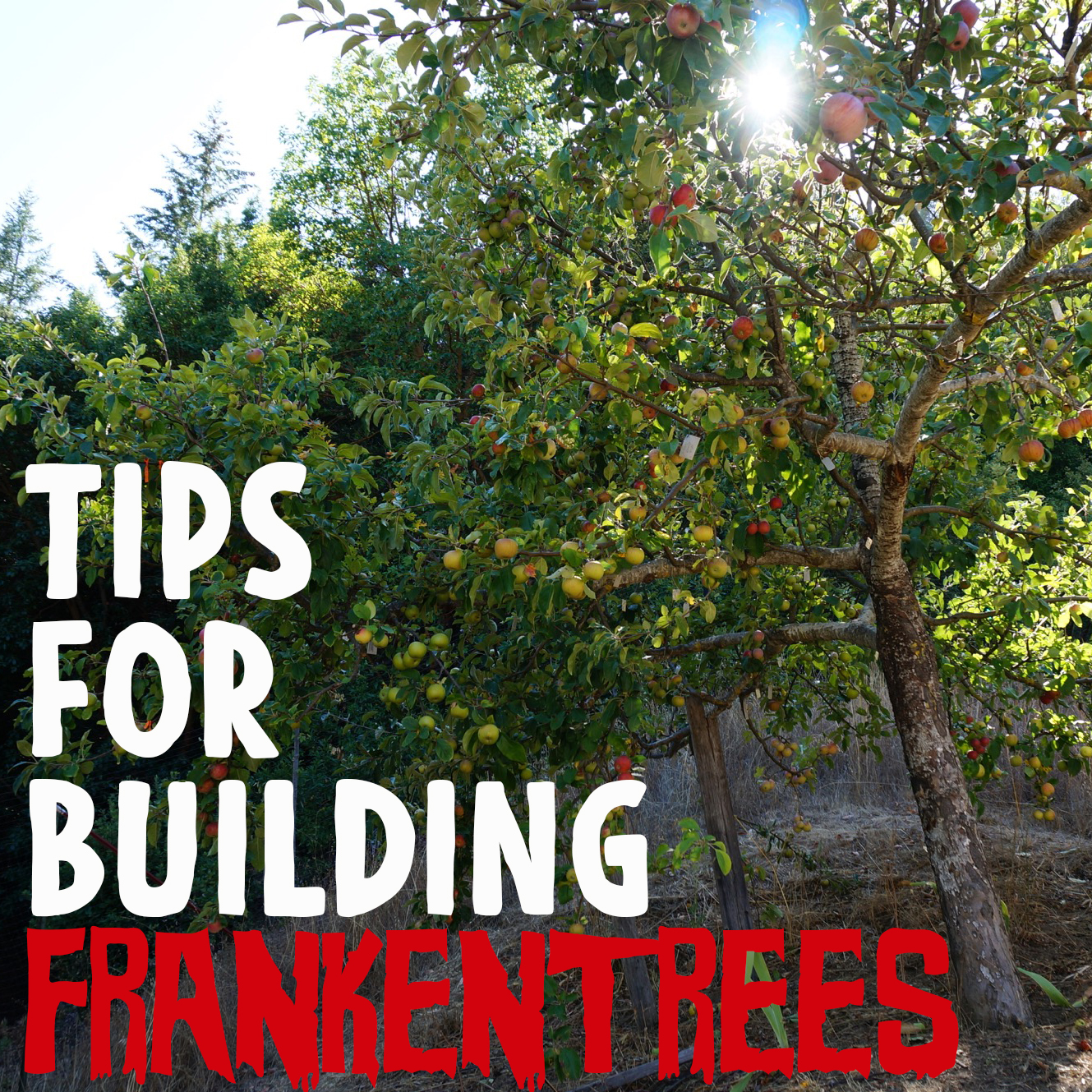 Tips forfrankentrees and frameworking