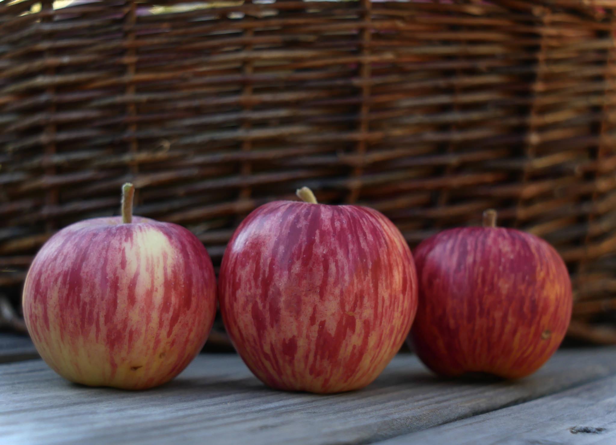 Peace Garden Apple Variety