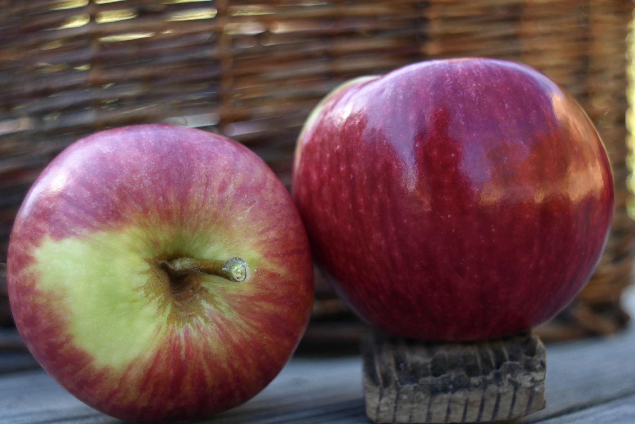 Sunrise Apple Variety