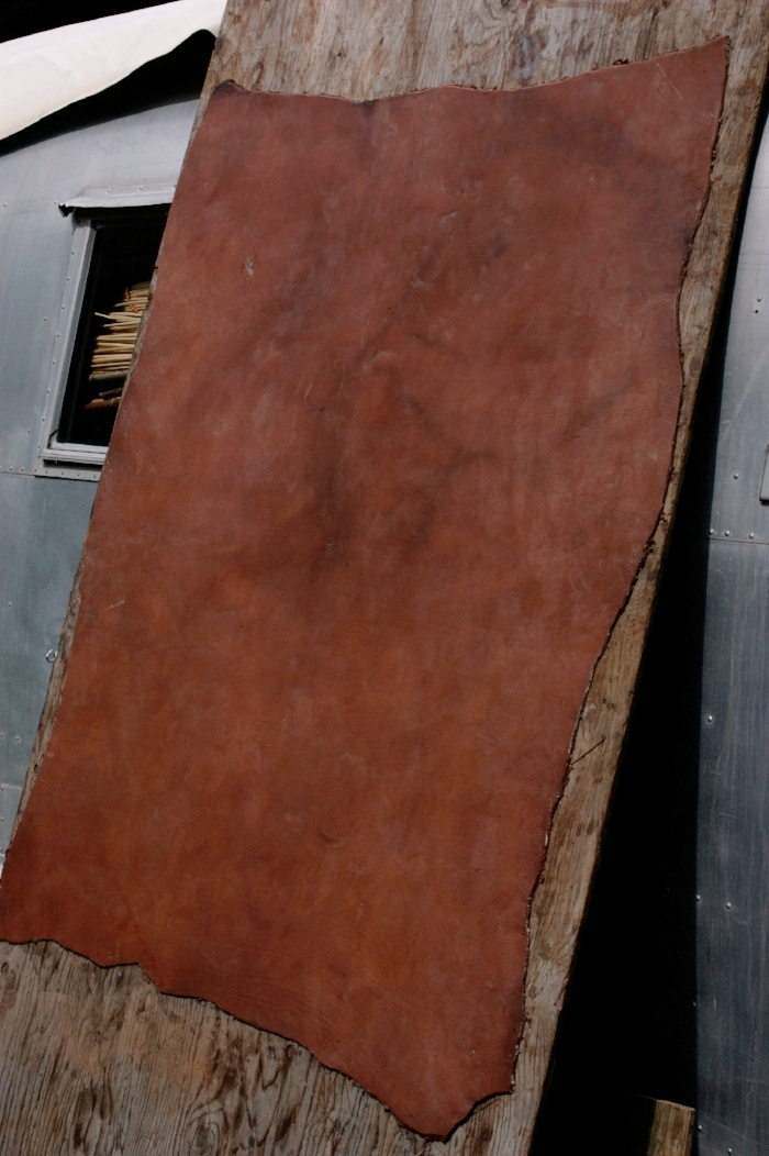 The same hide flattened, smoothed, pasted with fat to the board and left to dry slowly.