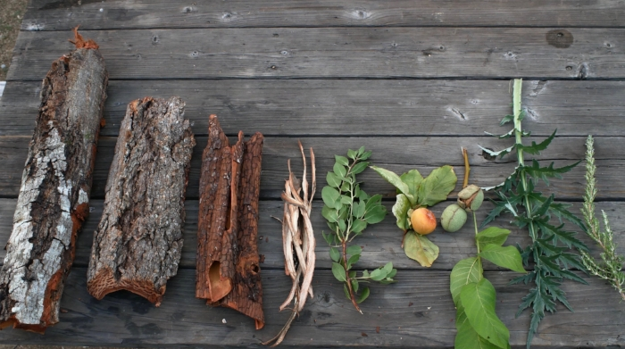All of these tanning materials are available in my immediate surroundings, probably within 200 yards, and that is with only one of 4 species of oak represented. Left to Right, Tan Oak bark, Douglas' Fir bark, Madrone bark, Willow bark, Manzanita leaves, Persimmon (unripe fruit and possibly leaves), English (aka Carpathian)Walnut hulls, Artichoke leaf and rosemary. Some of these are unrpoven, but no doubt all are high in tannins. That doesn't mean they will make good leather, but they can also be blended together. Blending is very common in vegetable tanning to take advantage of the good qualities of a material, or offset their negative characteristics or deficiencies.