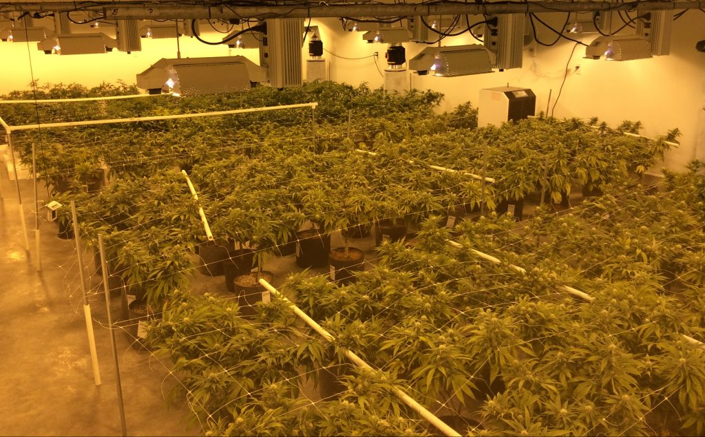 Stone Supply LLC cannabis growing operation. Located in Belfair, WA. Grows cannabis cultivar such as chocolope, green crack, death star, wifi og, vanilla kush, and more. Stone Supply also has a variety of cannabis concentrates available such as co2 oil.